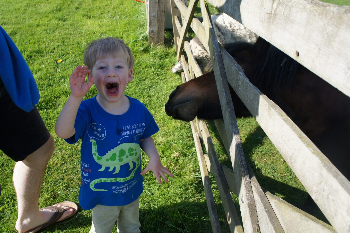 Farm feeding time