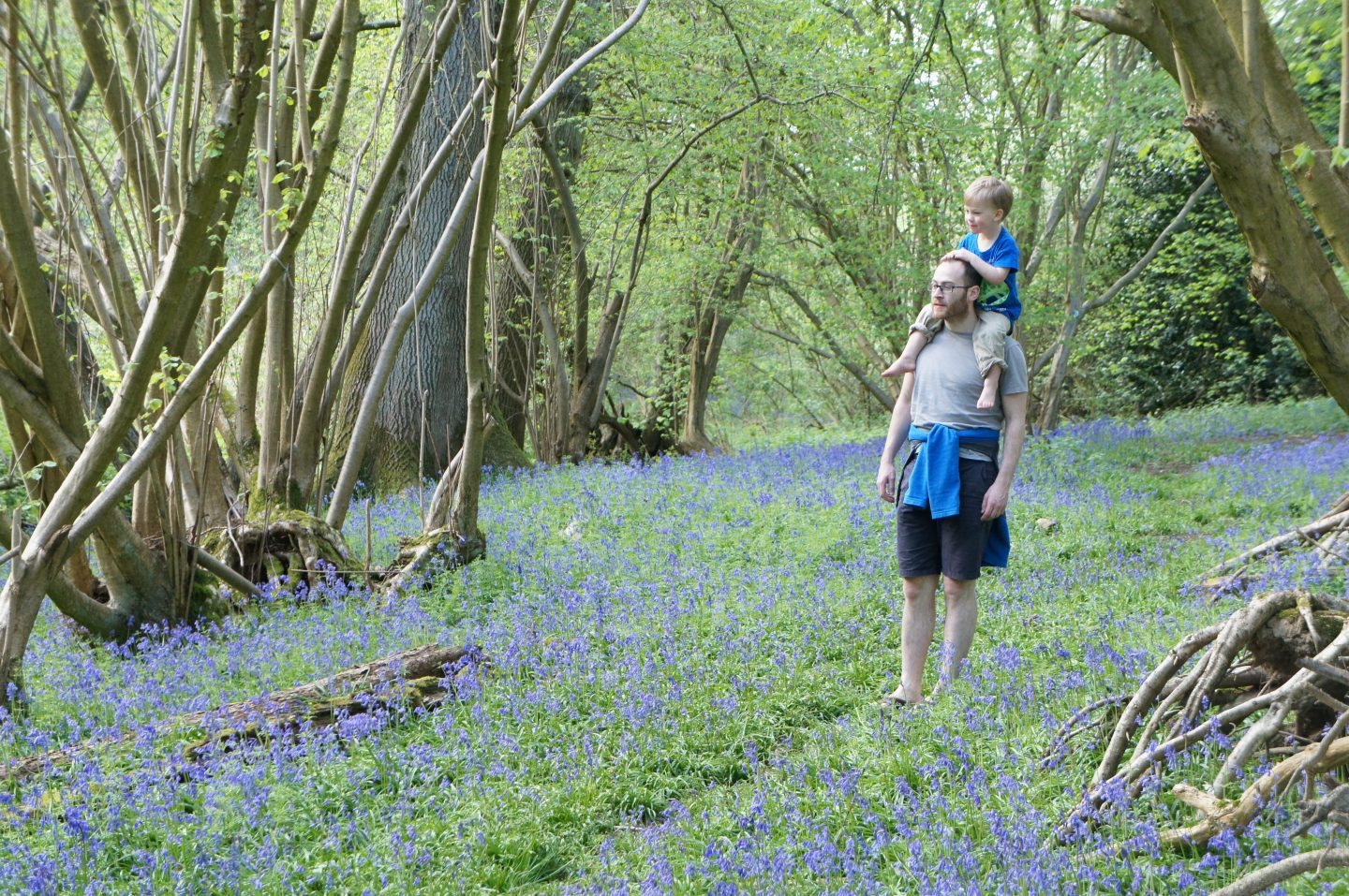 Bluebells at Gladwins