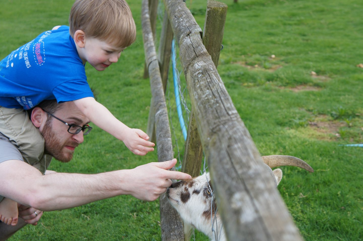 More feeding time